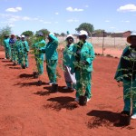 Moringa -a green platinum mine in Limpopo